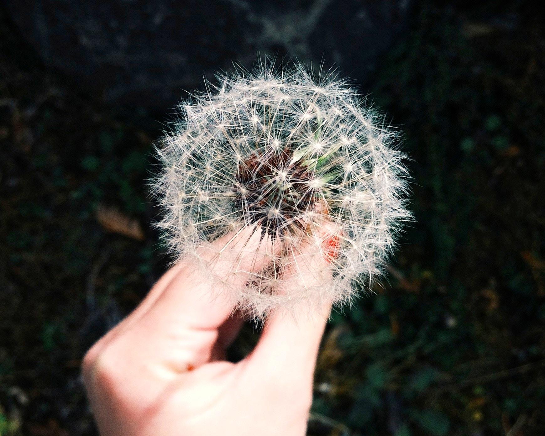 Quarto livre de alergias