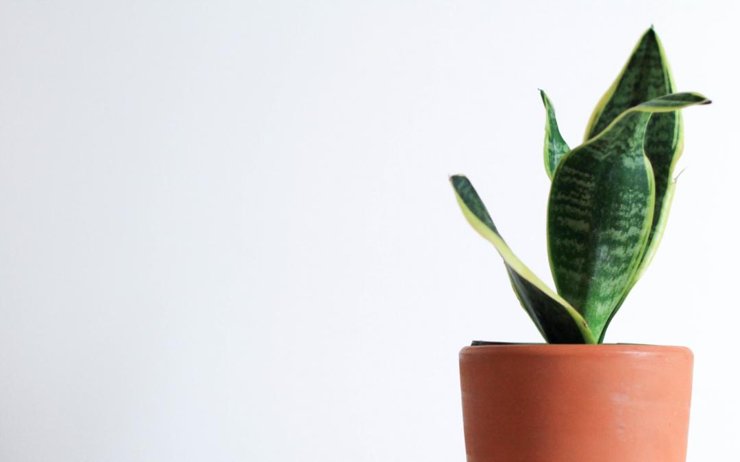 Estas são as plantas ideais para ter no quarto
