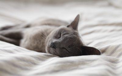 Como dormem os animais?