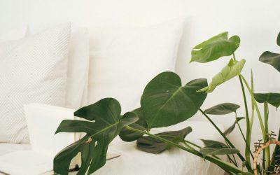 10 plantas para ter no quarto e dormir melhor